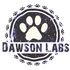 dawsonlabs3 - Best Lab Breeders in Missouri | English Labrador Puppies | Chocolate Labs
